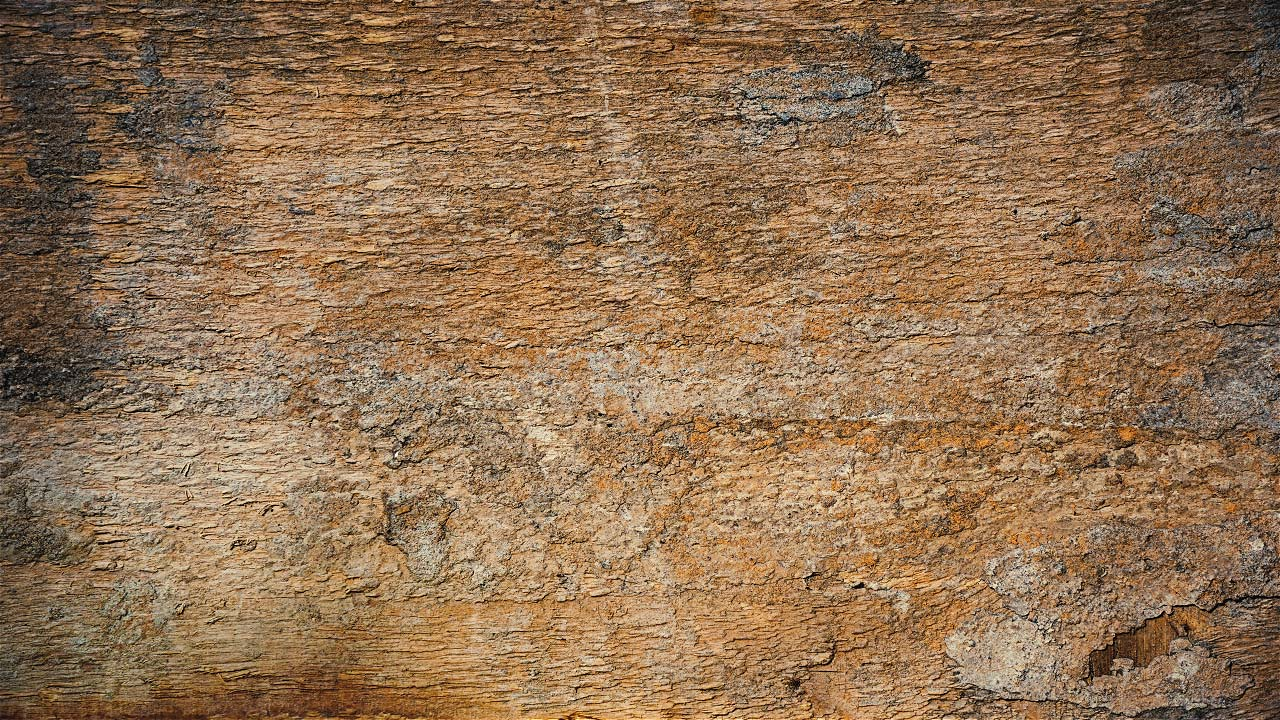 Free Wood Texture 07