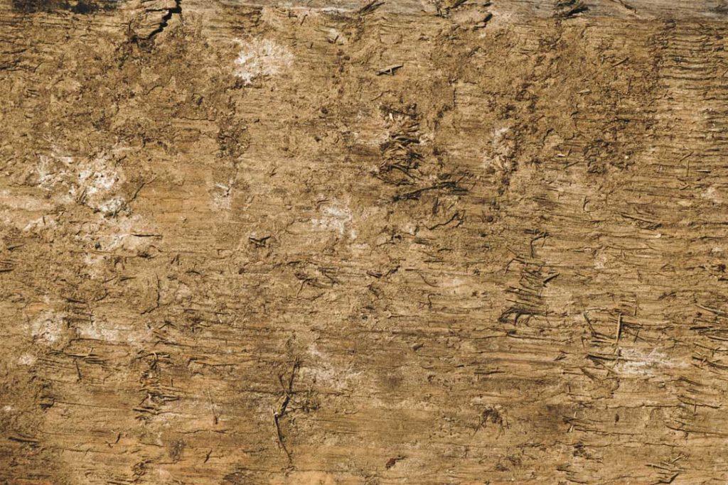 Wood_Texture_1_09