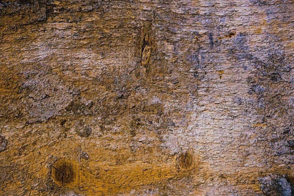 Wood_Texture_1_10
